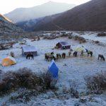 Bhutan Laya Trek (8)