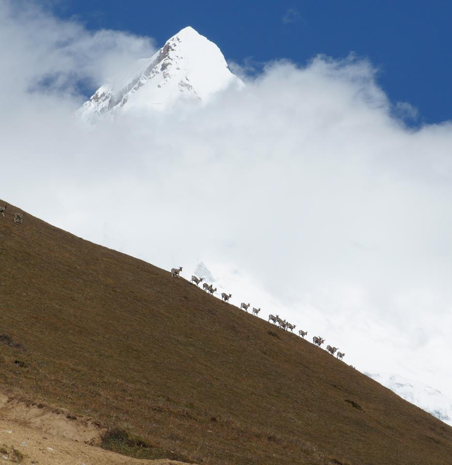 berghorizonte Bhutan Experte