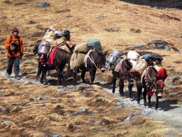 Bhutan Chomolhari Trek3