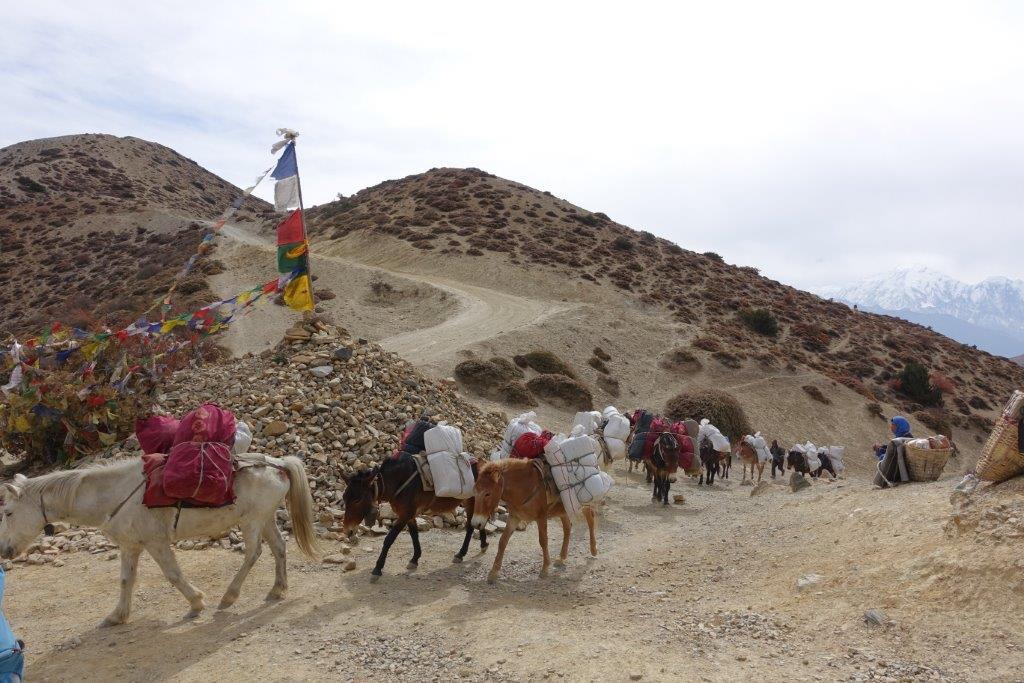 Nepal_Mustang_Annapurna_Chitwan_ Lodge Trekking (8)