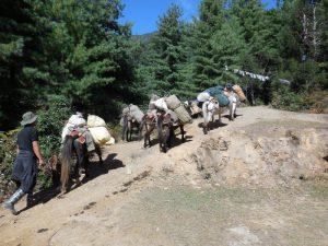 Bhutan-Myanmar Reise & Trekking (2)