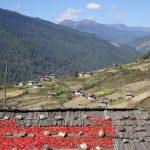 kunden-borst-bhutan-800×533