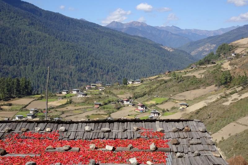 Chili auf einem Bauernhaus